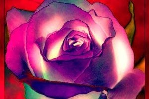 maerz-rose-natascha-stevenson